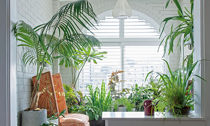 The great indoors: houseplants come back into vogue